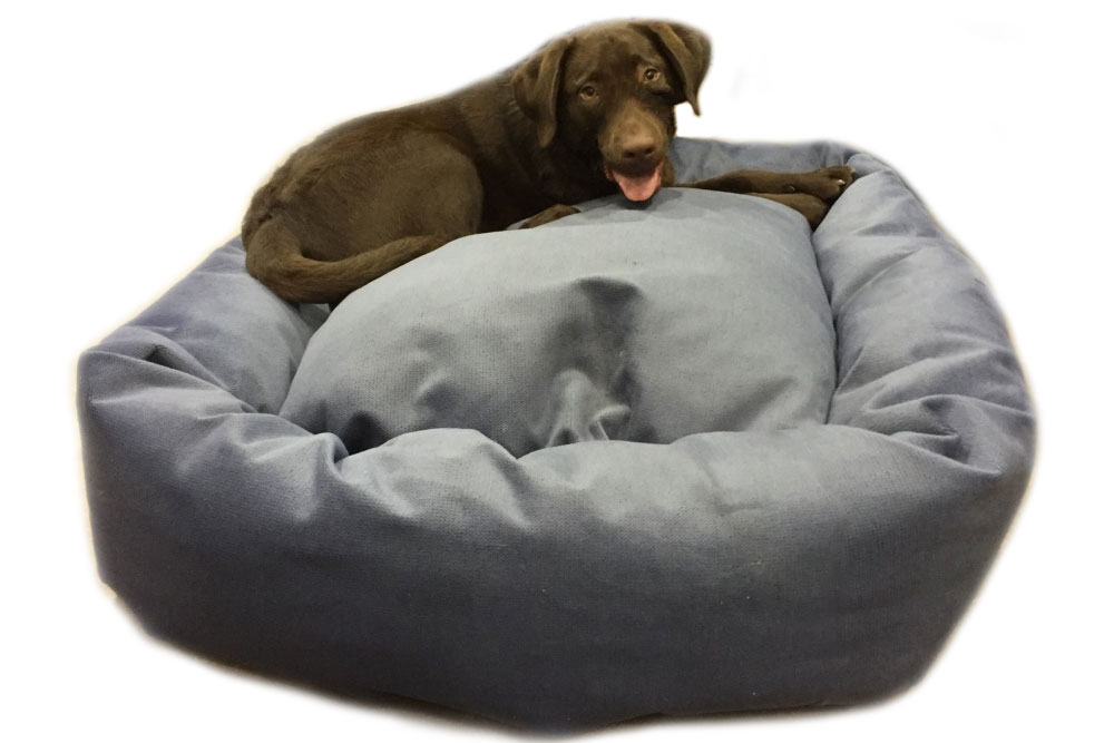 Labrador On Mammoth Bed