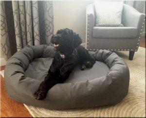 Porty on dog bed