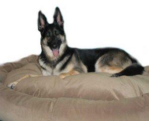 Shepherd on dog bed