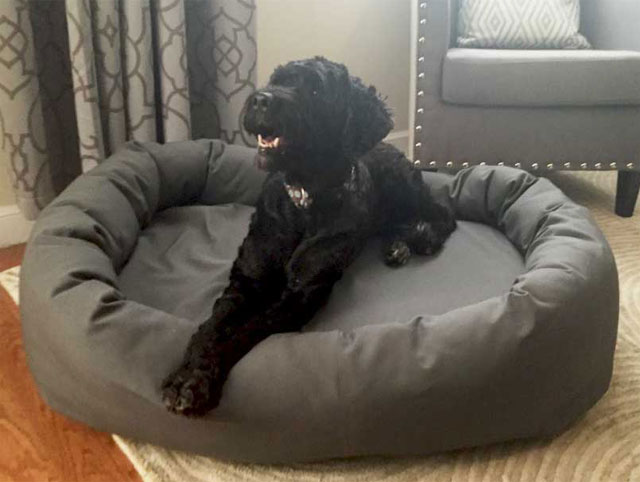 Memory Foam Dog Beds Vet Recommended, Waterproof Outdoor Dog Bed Canada